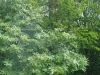 AHMEDIYE-GOKTEPE-BEKPINAR KOYU YURUYUSU (07 EKIM2007) 033.jpg