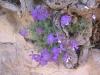 23 Nisan Osmanel Dereyoruk1 031_jpg.jpg