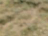 Ayakizleri doguda (14-23.7.06) 602.jpg