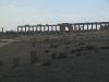 Suriye (Ocak 2006) 403.jpg