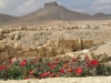 Suriye (Ocak 2006) 410.jpg