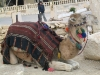 Suriye (Ocak 2006) 420.jpg