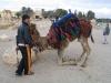 Suriye (Ocak 2006) 495.jpg