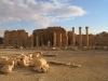 Suriye (Ocak 2006) 568.jpg